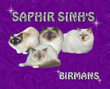 Saphir Sinh´s Birmans - Click to enter